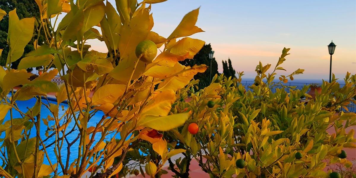 Poolside Orange Trees, Hotel Villa Diodoro, Prestigious Venues